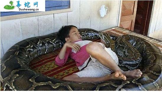 蟒蛇(无毒蛇)详细资料、图片及品种