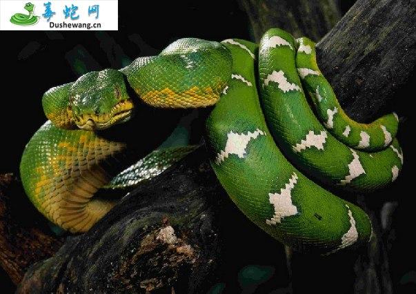 蟒蛇图片2