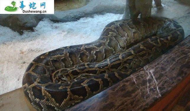 蟒蛇图片3