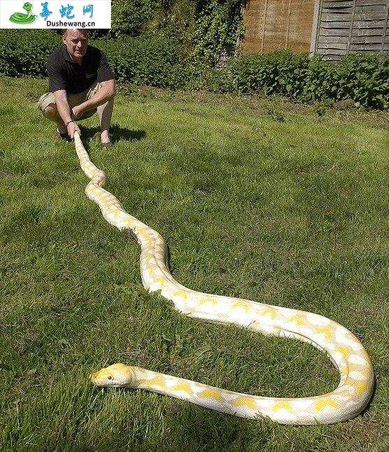 蟒蛇图片4