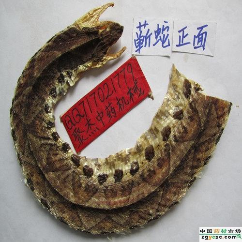 五步蛇\/蕲蛇\/尖吻蝮图片
